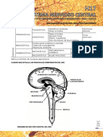 h17 - Sistema Nervioso Central