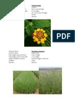 Plants for Giardino