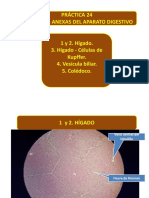 +Pr. 24 - Glándulas anexas al Ap. Digestivo