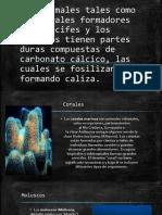 Caparazones de Carbono