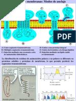 Clase12 Proteinas de Membrana A