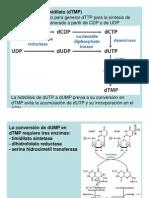 Metab_BN_y_nucleotidos_B