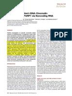 Inheritance of Silent rDNA Chromatin
