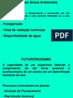 CRESCIMENTO 2