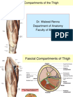 2013- Lower Limb-Fascial Compartments of Thigh - Student Version