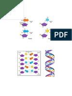 Acids Nucleics