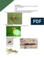 Que Es El Control Biologico PDF