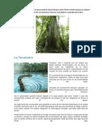 Trabajo de La Selva (1)