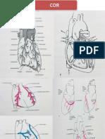 Anatomy and Pathblood Way of Cor by Zainal