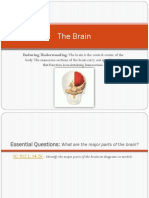 The Brain Power Point.pdf