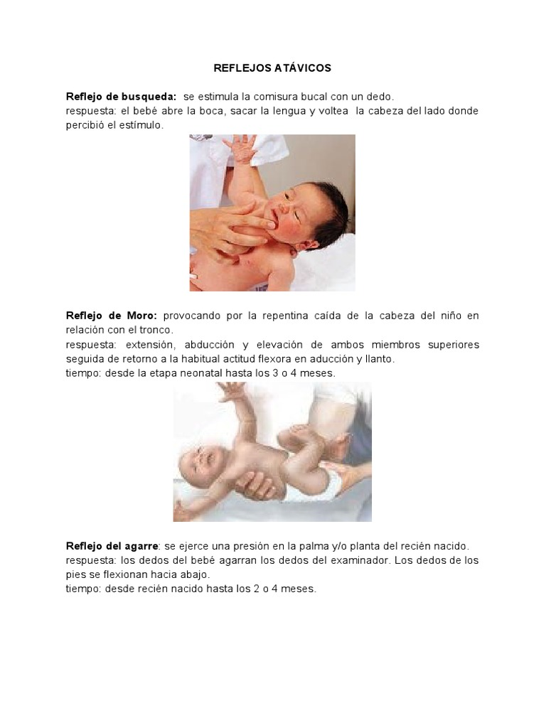 Lujoso Anatomía Cabeza Neonatal Adorno - Imágenes de Anatomía Humana ...