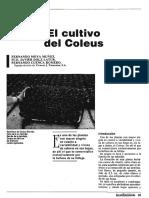 El Cultivo de Coleus