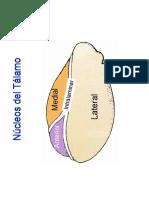 nucleos talamicos.pdf