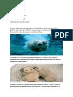Animal en Peligro de Extinción.docx