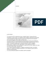 El oso polar en riesgo de extinción.docx