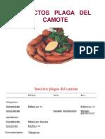 2 Clase 4unidad_camote y Productos Almacenados 2015 Ok Ok