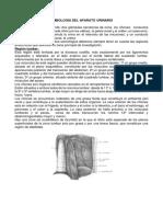 Semiologia Del Aparato Urinario