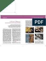 script-tmp-inta-_la_filoxera_en_mendoza_actualizacin_de_una_pl.pdf