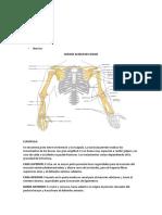 Anatomia de Hombro y Codo
