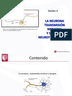 Clase 3 La Neurona Sinapsis 2016 II