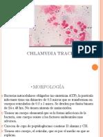 26 Chalmydia Trachomatis[1]