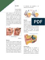 10 Enfermedades Del Oído