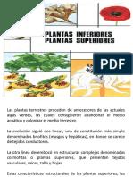 Clase II Plantas Superiores e Inferiores