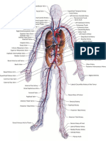The Main Arteries and Veins of the Body