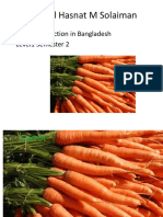 Carrot Production package Presentation Dr A H M Solaiman