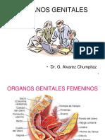 (31) Organos Genitales