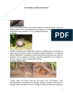 20 Animales en Peligro de Extinción