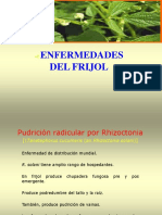 enferm.frijol 2do parcial.ppt