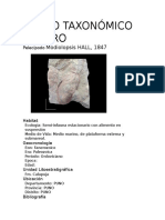 Paleonto-Descripcion de Fosiles