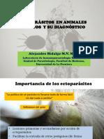 j Hidalgo Ectoparasitos en Exoticos