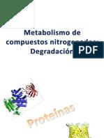 Metabolismo de Compuestos Nitrogenados