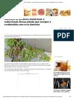 Conheça Os Poderes Medicinais e Nutricionais Dessa Planta Que Sempre é Confundida Com Erva Daninha