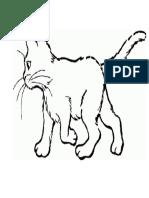 Partes de Un Gato