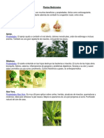 Plantas Medicinales Con Concepto
