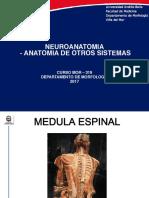 Clase Medula Espinal 2017