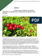 GLOBO RURAL - Notícias Sobre Agronegócios, Agricultura, Pecuária, Meio Ambiente e o Mundo Do Campo - EDT MATERIA IMPRIMIR - Cranberry Terapêutica