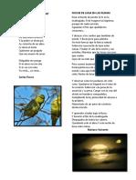 UN LORITO DE VERAPAZ.docx