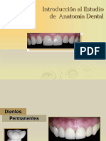 Anatomia Dental...Parcial