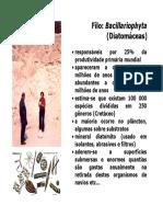Diatomaceas