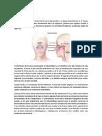 comunicacion bucosinusal.docx
