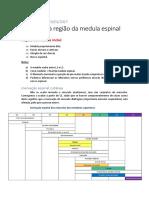 Resumos de CF Medula, funções e tratos
