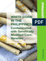 White Corn in the Philippines