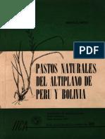 Pastos Altiplano