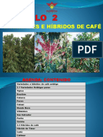 10. Variedades e Híbridos Del Café
