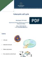 Exe III-cell Cycle (1)