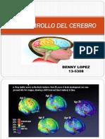 2-Elaborar Una Presentación en Powert Point Sobre El Desarrollo Del Cerebro. DENNY LOPEZ